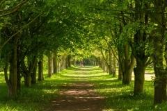 The Great Avenue (c) John Harradine